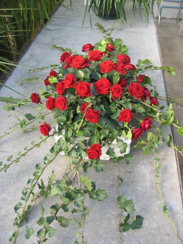 10 Sarggesteck mit roten Rosen und Efeu