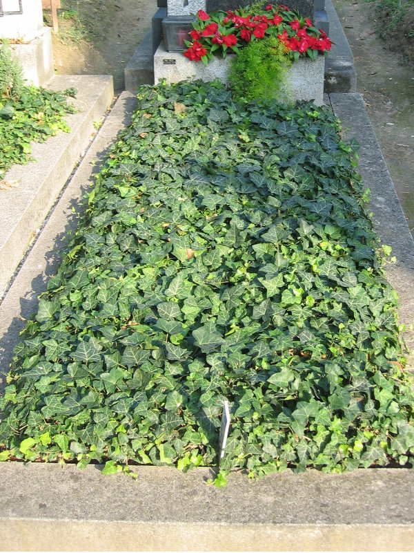 5 Grab mit Bodendecker Efeu