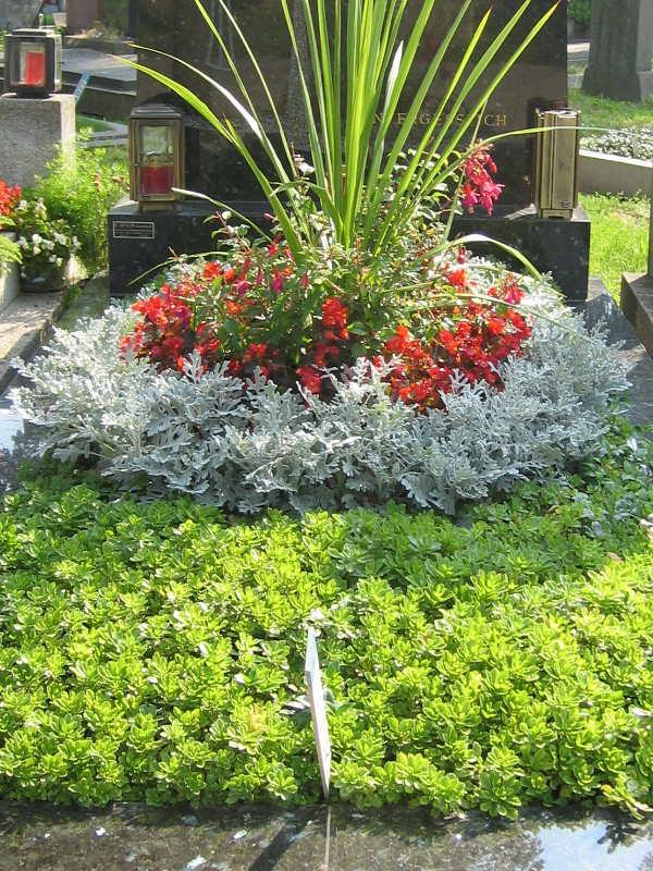6 Grab mit Bodendecker Sedum