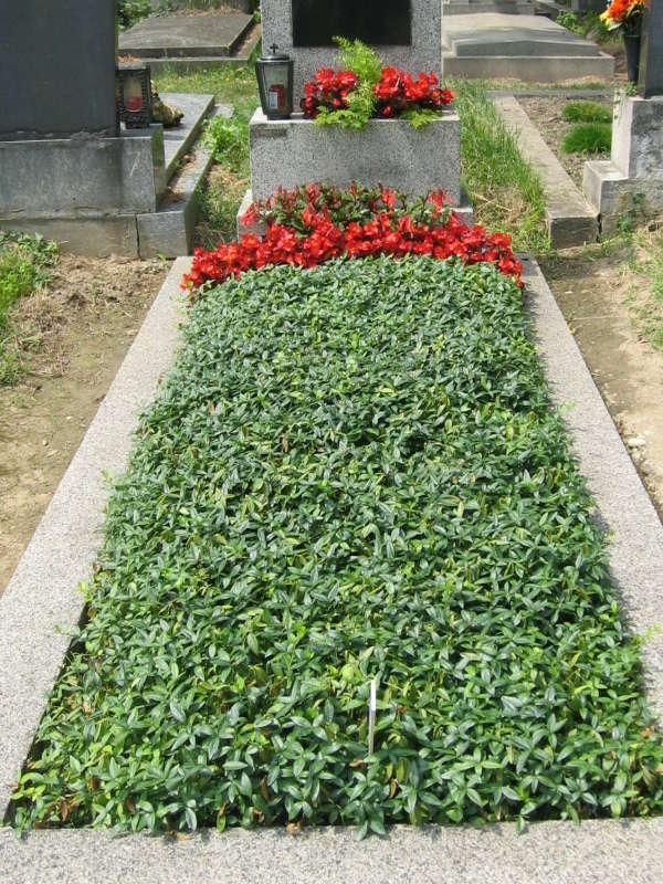 7 Grab mit Bodendecker Immergrün