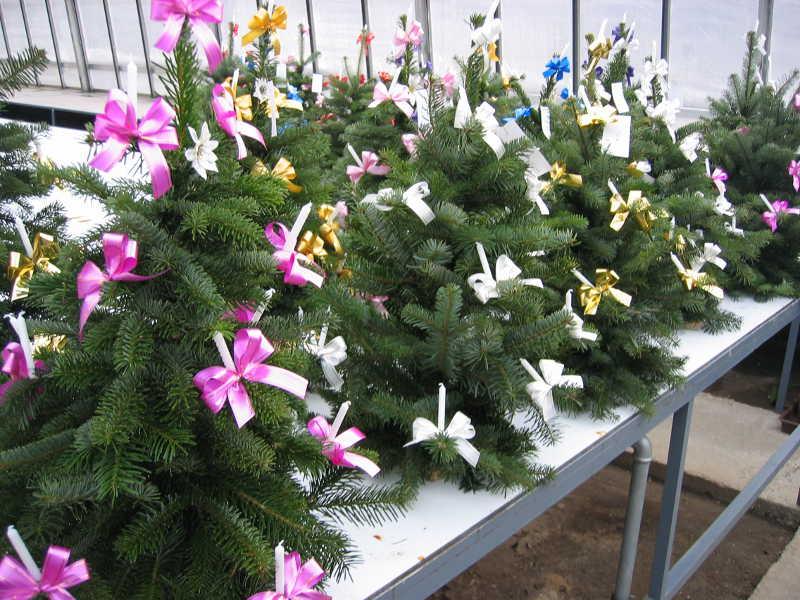 8 Weihnachtsgesteck Christbaum