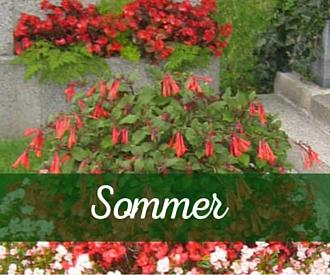 Grabbepflanzung Sommer