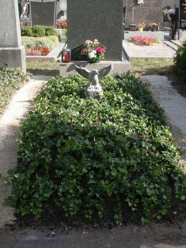 5a Grab Dauerbepflanzung Efeu