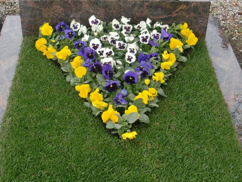 9 Frühlingsbepflanzung mit Stiefmütterchen